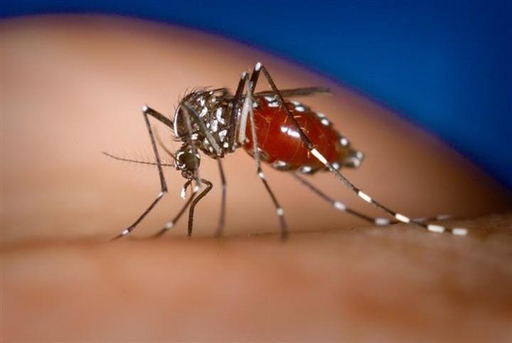 Πέντε τα κρούσματα από τον ιό του Δυτικού Νείλου