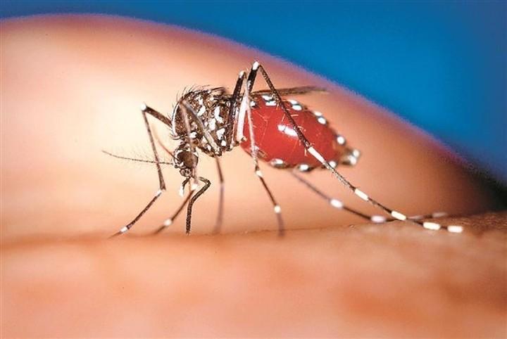 Εντεκα άτομα νόσησαν από τον ιό του Δυτικού Νείλου