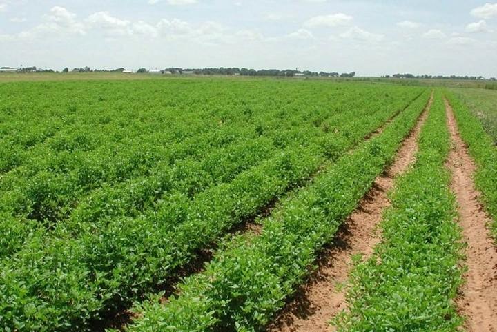 Fast Track επενδύσεις στον αγροτικό τομέα