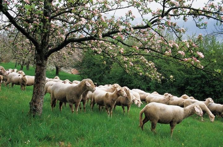 Στους κτηνοτρόφους θα δοθούν 35 εκατ. ευρώ
