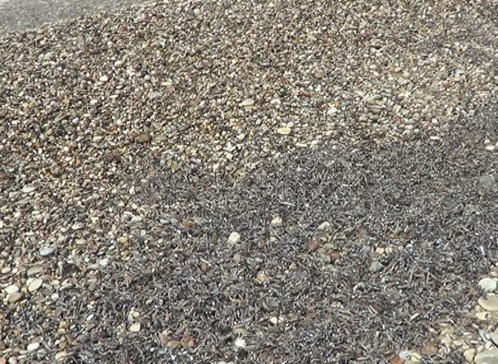 Χιλιάδες νεκρά ψάρια στη Σάμο