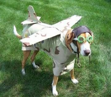 Αirplane... dog: Πτήσεις χωρίς προβλήματα