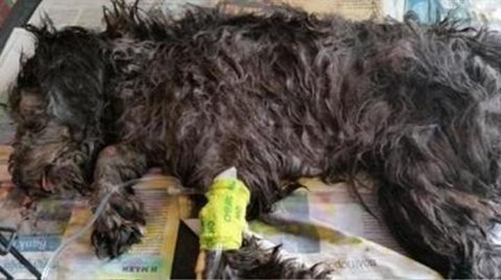 Σε διαθεσιμότητα υπάλληλοι ξενοδοχείου για κακοποίηση σκυλιού