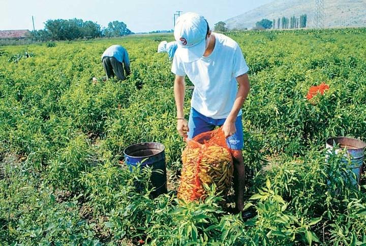Τράπεζα Πειραιώς: Νέα συμφωνία για συμβολαιακή γεωργία με τη «Ρήγας»