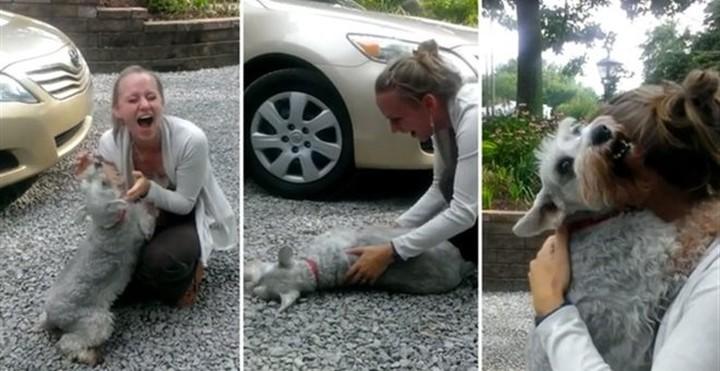 Σκυλάκι λιποθυμά από τη χαρά του βλέποντας την ιδιοκτήτριά του μετά από 2 χρόνια