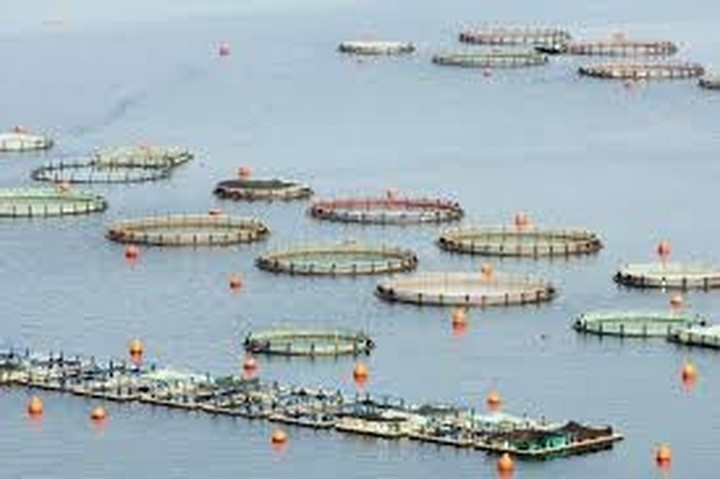 Προτάσεις και ενστάσεις στο νομοσχέδιο για τις υδατοκαλλιέργειες