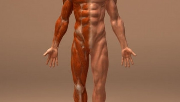 Αλήθειες για το ανθρώπινο σώμα, που δεν φαντάζεστε