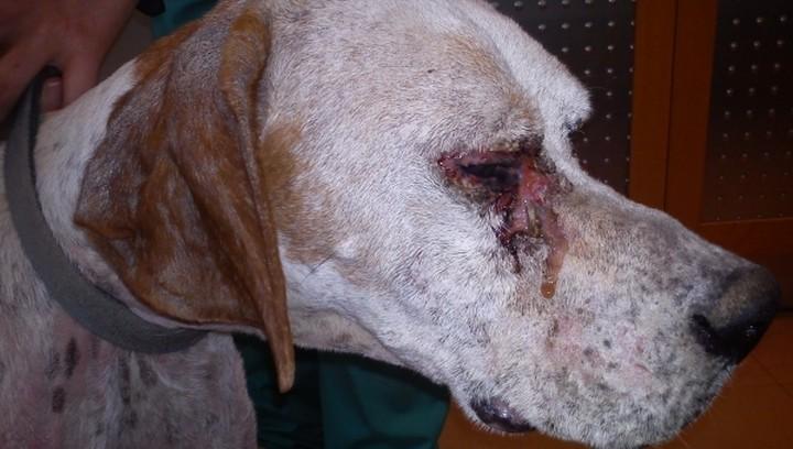 Πώς θα προστατεύσετε τον σκύλο σας από το Καλαζάρ;