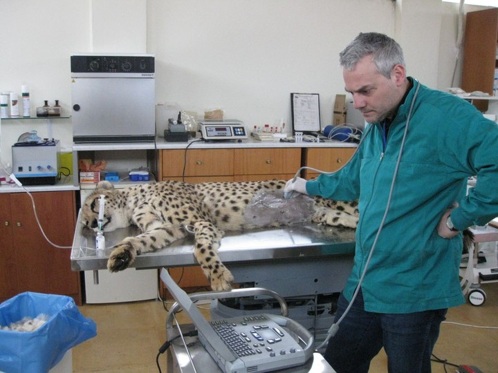 Υπερηχογράφημα σε ζώα: H εξέταση που σώζει