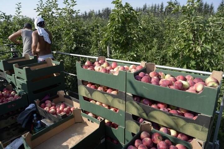 Στους 22.000 τόνους τα αδιάθετα φρούτα στην Πέλλα, από το ρωσικό εμπάργκο