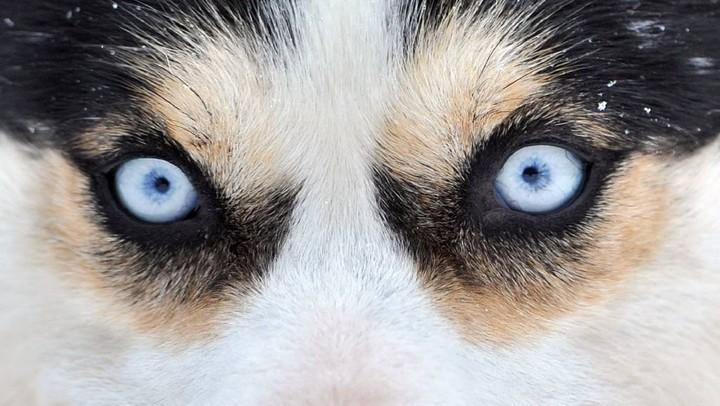 «Φιλόζωος» ενοικιαστής κλείδωσε στο σπίτι που εγκατάλειψε έξι σκυλιά
