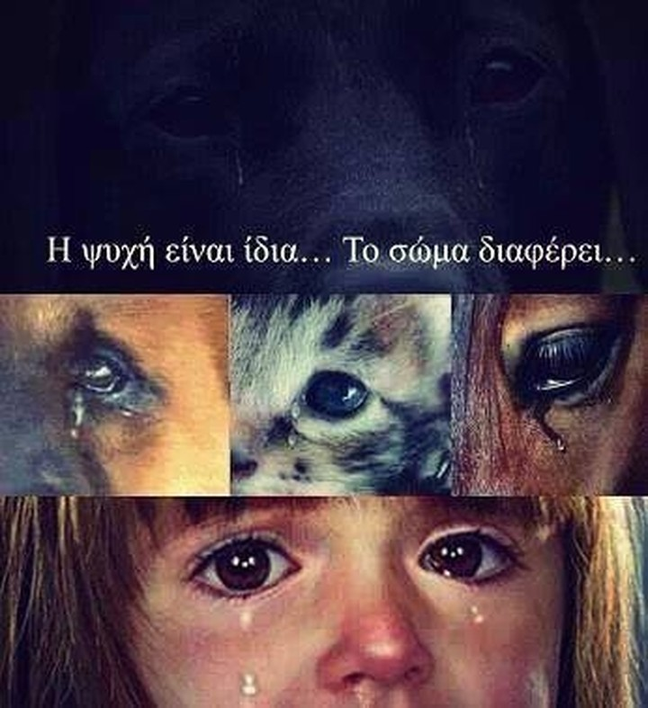 ΕΛ.ΑΣ: Καταγγείλτε την κακοποίηση των ζώων