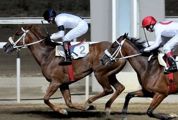O ΟΠΑΠ, η Intralot και το μεγάλο παζάρι για το ιπποδρομιακό στοίχημα