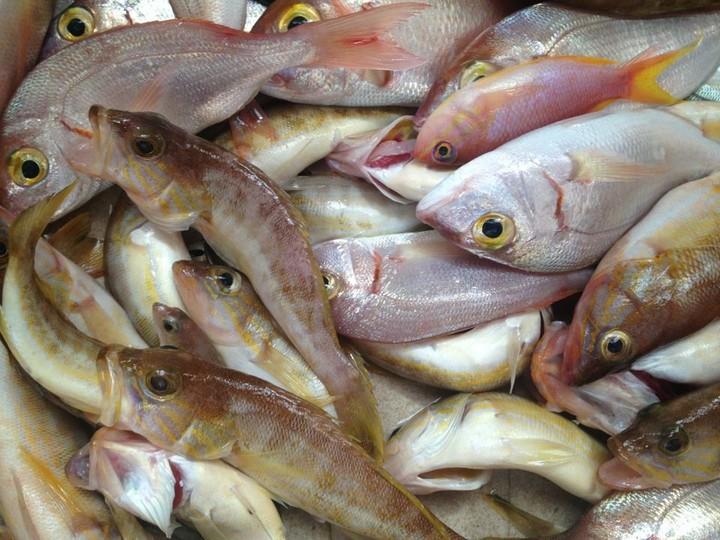 Μπλόκο σε ψάρια και ακτινίδια σε έλεγχο τροφίμων
