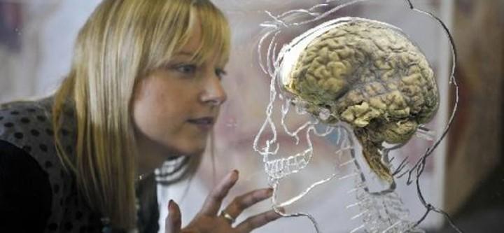 Ο εγκέφαλος των δίγλωσσων και των πολύγλωσσων έχει περισσότερη ικανότητα