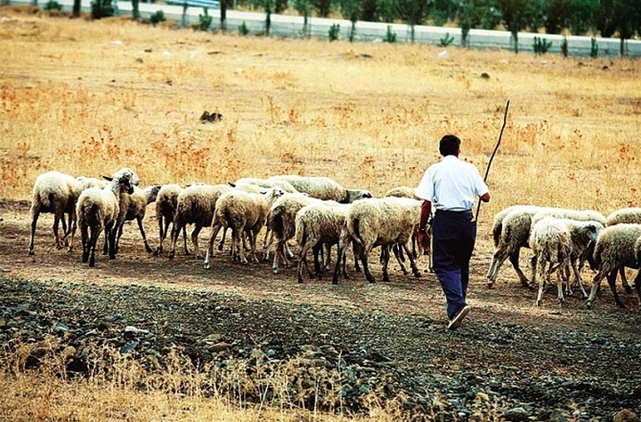 Γ. Καρασμάνης: Έκτακτη ενίσχυση 4,5 εκατ. στους κτηνοτρόφους