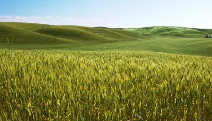 Πρόγραμμα Αγροτικής Ανάπτυξης για την ανταγωνιστικότητα και την εξωστρέφεια του πρωτογενούς τομέα