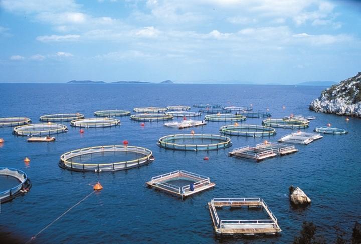 Πώς οι Τούρκοι εκτοπίζουν το ελληνικό ψάρι από τα ράφια των γερμανικών supermarkets