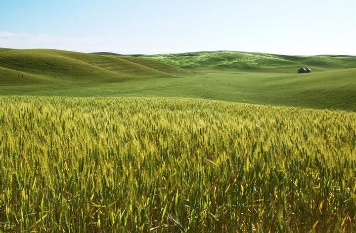 ΕΛΓΑ: Επιχορήγηση 1 εκατ. ευρώ για προστασία των καλλιεργειών από φυσικά φαινόμενα