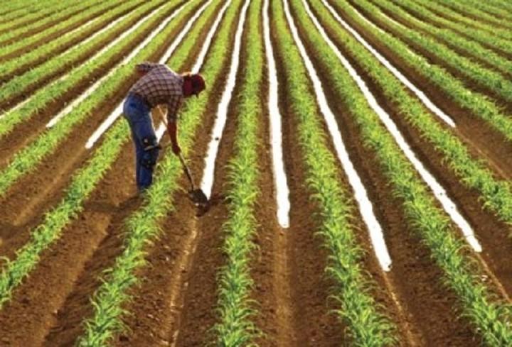 Καταργείται ο ΕΝΦΙΑ σε χωράφια και στάνες