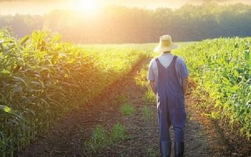 Πότε θα πάρουν πίσω το ΦΠΑ οι αγρότες - Όλα όσα προβλέπει η ΓΓΔΕ
