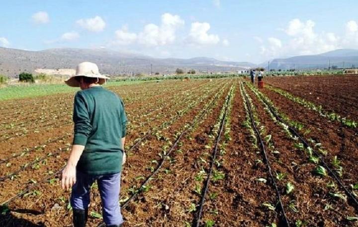 Νέο πρόγραμμα συμβολαιακής γεωργίας από την Εθνική