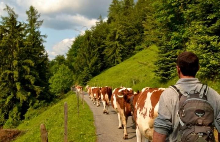 Η Ελβετία προσφέρει εργασία σε πρόσφυγες με μισθό 3000€