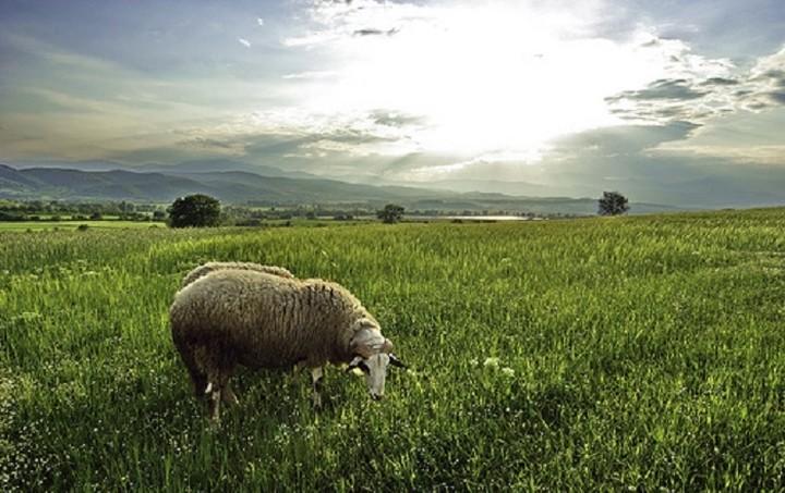 «Καμπάνα» εκατομμυρίων ρίχνει η Κομισιόν για τους βοσκότοπους στην Ελλάδα