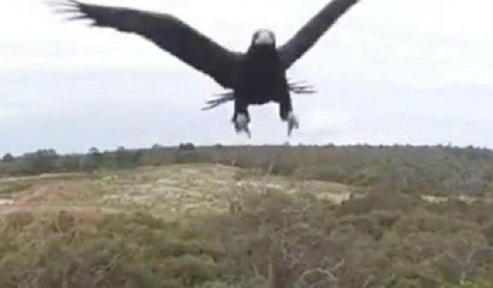 Επίθεση αετού σε drone - Δείτε το βίντεο όπως το κατέγραψε η κάμερα
