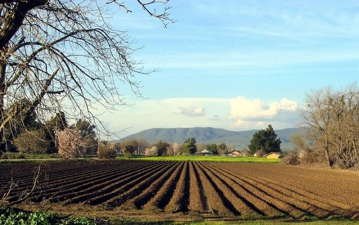 Σε λιγότερα χέρια η αγροτική γη σε όλη την ΕΕ, σύμφωνα με τη Eurostat