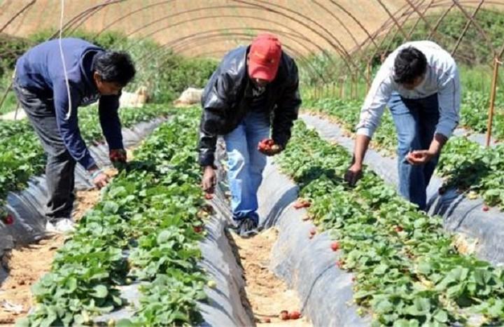 Πρόστιμα «μαμούθ» για όσους δεν δηλώνουν τους αλλοδαπούς εργάτες