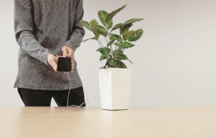 Γλάστρα φορτίζει το κινητό σας μέσω της φωτοσύνθεσης (ΒΙΝΤΕΟ)