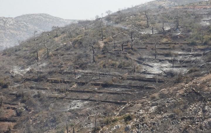 Στάχτη έγιναν πάνω από 35.000 μαστιχόδεντρα στη Χίο