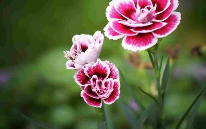 Η ελληνογερμανική επένδυση των… λουλουδιών