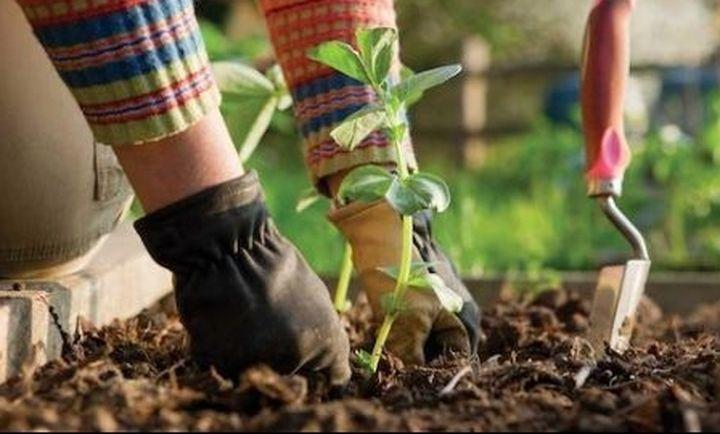 Την Παρασκευή οι αποζημιώσεις σε 54.688 αγρότες από τον ΕΛΓΑ