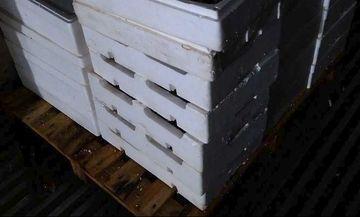 Κατασχέθηκαν 198 κιλά ψάρια επειδή ήταν μικρότερα του κανονικού