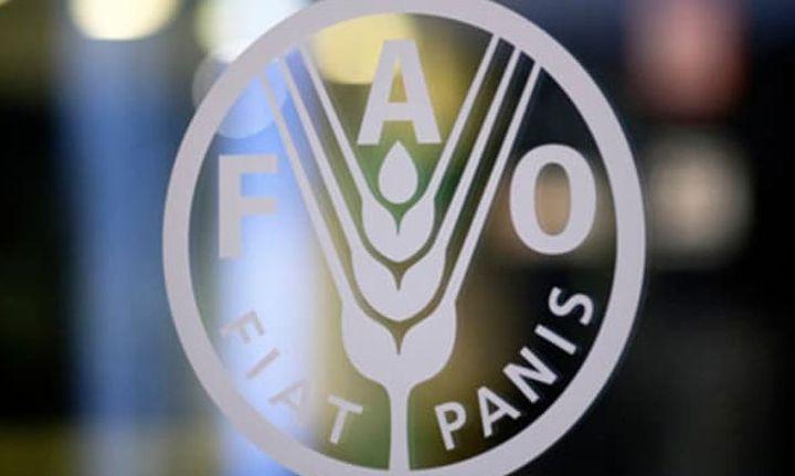 FAO: Το μισό του παγκόσμιου πληθυσμού θα υποσιτίζεται έως το 2030