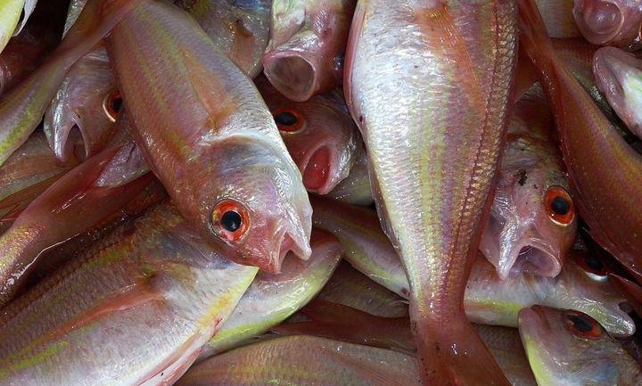 Δέσμευση αλιευμάτων και κατάσχεση ακατάλληλων κοτόπουλων