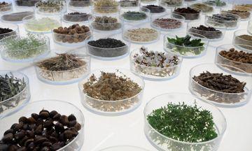 Στα χέρια ξένων οι ελληνικές εταιρείες φυτικών καλλυντικών