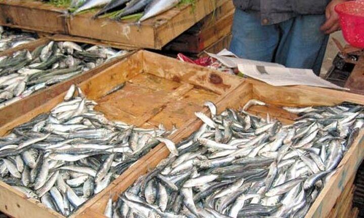 Κατάσχεση αλιευμάτων που ξεπερνούν τους 21 τόνους