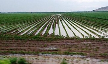 Τράπεζα Πειραιώς: Στήριξη σε αγρότες που επλήγησαν από θεομηνίες