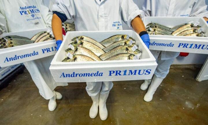 Andromeda Seafood: Ολοκλήρωση της εξαγοράς του Νηρέα και της Σελόντα