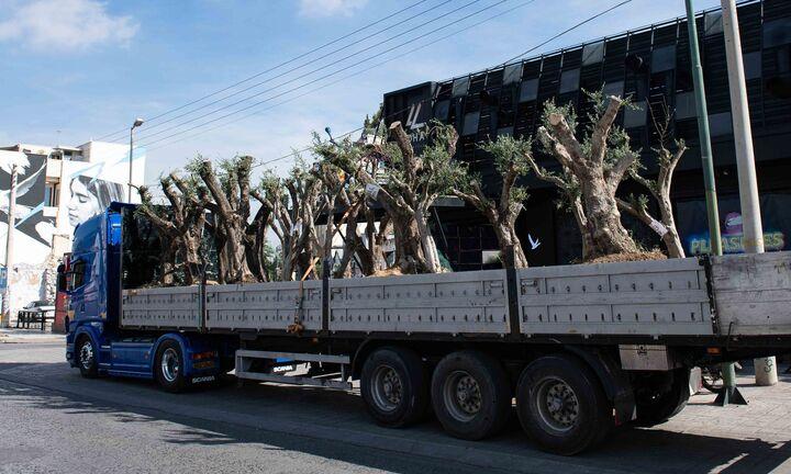 Παράδοση ελαιόδεντρων από την ΕΡΓΟΣΕ στο Δήμο Αθηναίων και στον Δήμο Ιλίου προς μεταφύτευση
