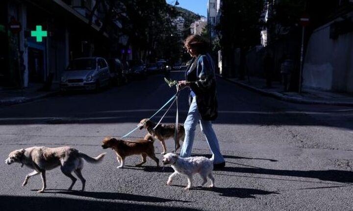 Ερευνα: Εκτρεφόμενα ζώα και κατοικίδια δεν μεταδίδουν σε ανθρώπους τον κορονοϊό