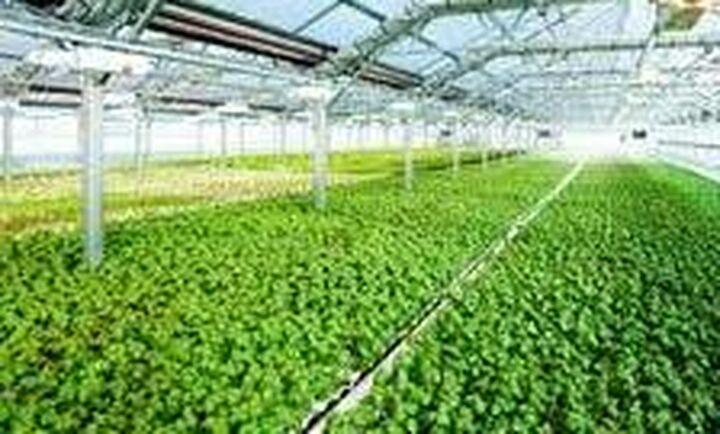 Επένδυση 6 εκατ. για υδροπονικό θερμοκήπιο παραγωγής πράσινων λαχανικών και μυρωδικών στη Βοιωτία