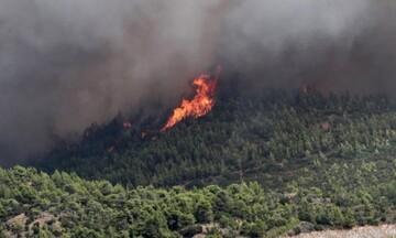Εύβοια: Πυρκαγιά σε πευκοδάσος στη Λίμνη