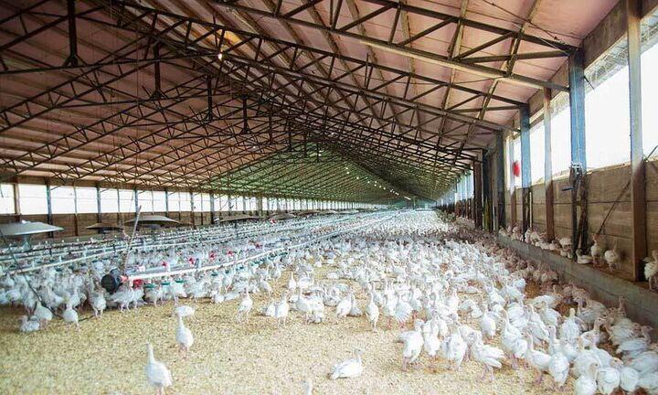 Στον Αναπτυξιακό οι πτηνοτροφικές