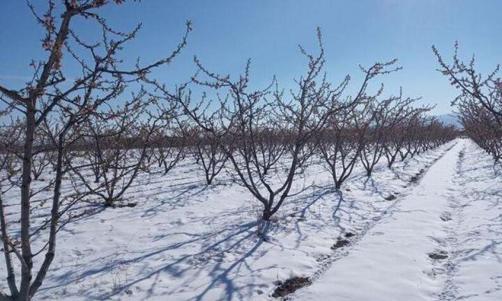 Σπ. Λιβανός: Θα αποζημιωθούν όλοι οι παραγωγοί που επλήγησαν από τον παγετό