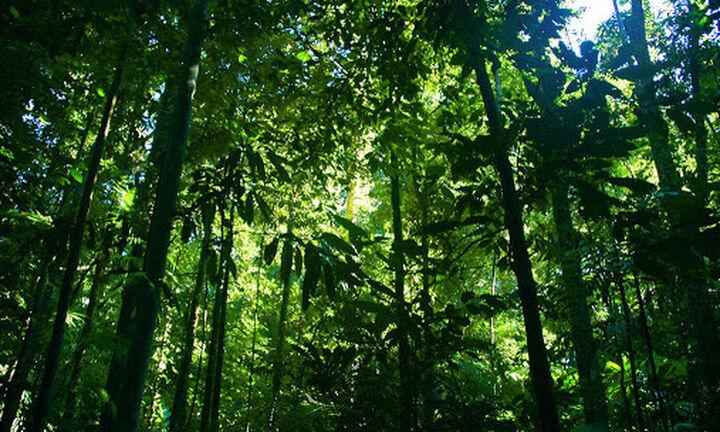 Παγκόσμια Ημέρα Γης: Μόλις το 2,8% των οικοσυστημάτων του πλανήτη παραμένει ανέπαφο