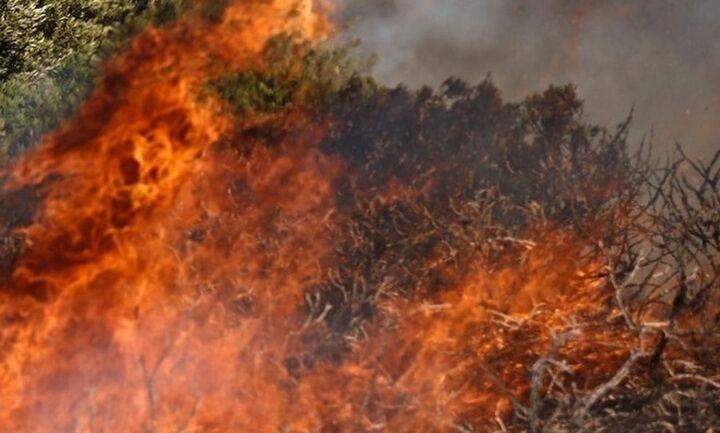Φωτιά σε δασική έκταση στην περιοχή Σμέρνα της Ηλείας